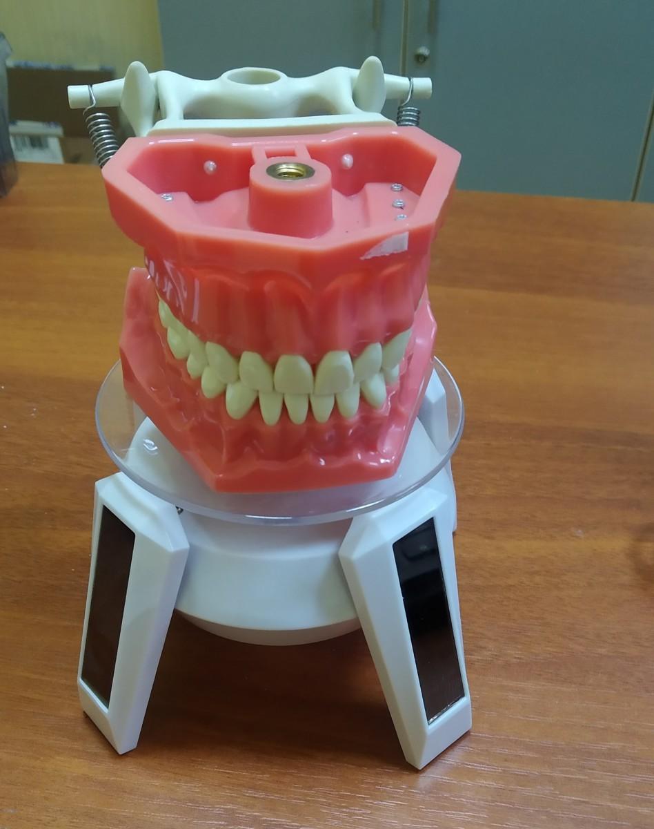 Анатомическая модель челюсти 0001
