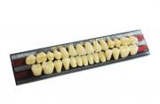 Гарнитура зубов New Ace