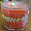 Модель 7008 зі знімними зубами